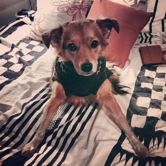 Cute Dog in Sweater I Picture