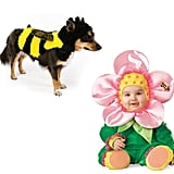 Bumblebee and Flower Blossom