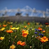 Colorful flowers surrounded the Olympic Stadium.