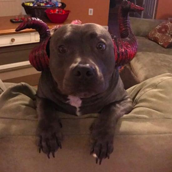 Viral Photo of Sad Dog on Halloween