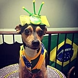 We think Kate Middleton should take headwear inspiration from this pup's fascinator. Source: Instagram user marcelaamarques