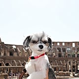 Then I went to the Colosseum . . .