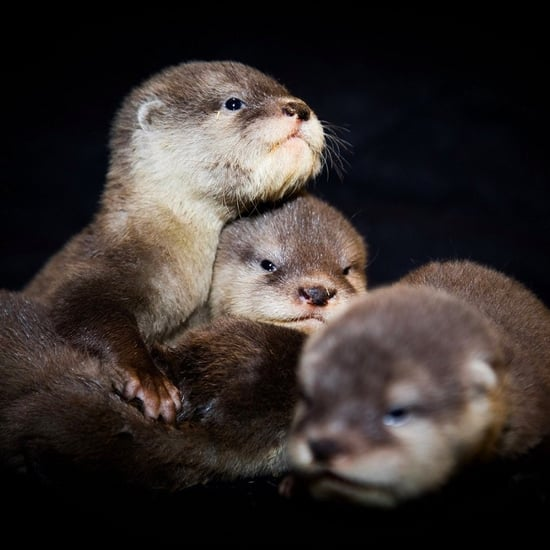 VIDEO: Watch Baby Otters' First Swim at Dubai Aquarium Zoo