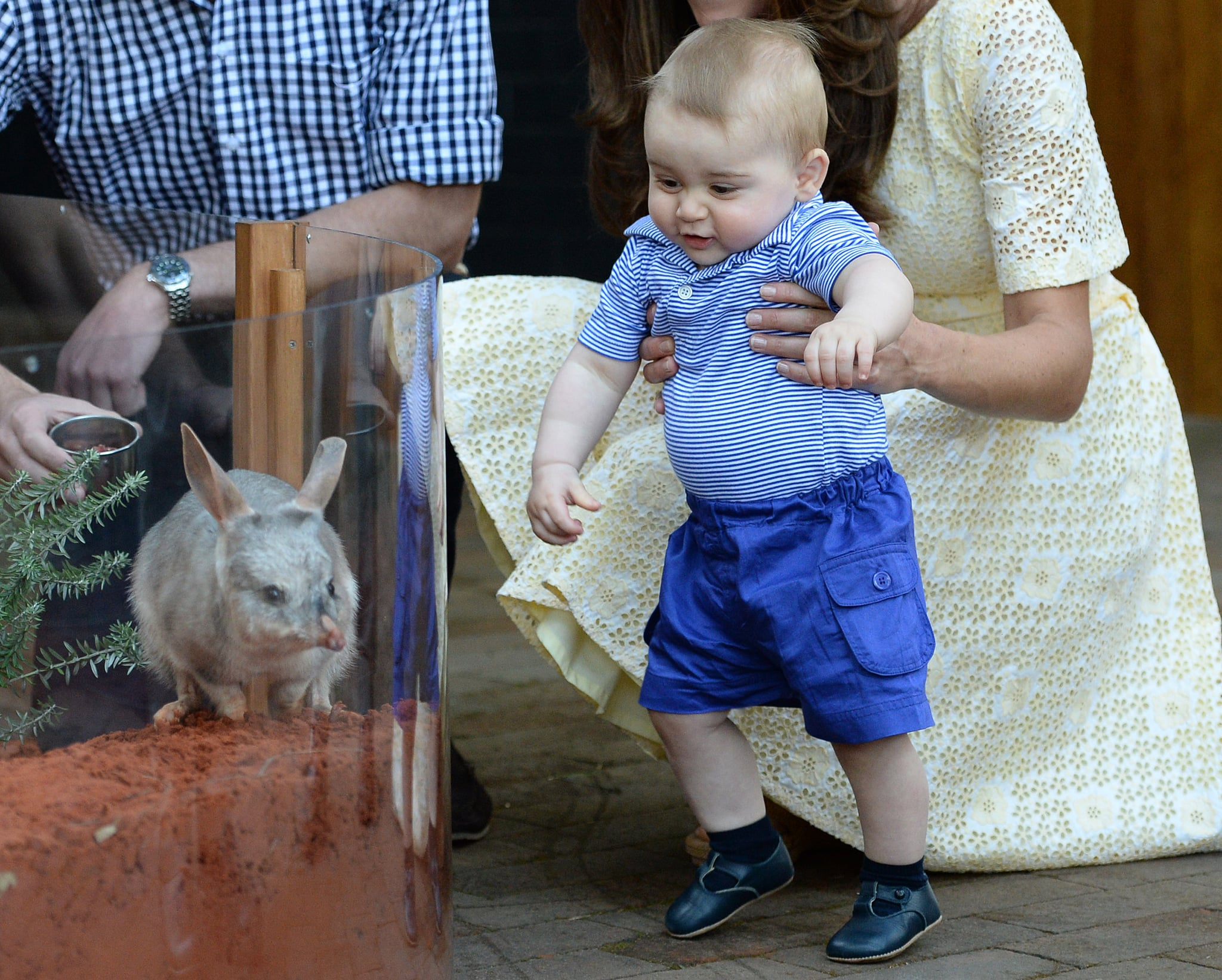When He Freaked Out Over a Bilby