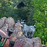 The goat eating dynamite in the Thunder Mountain Railroad ride.