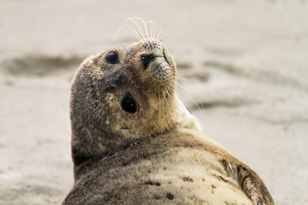 This seal who took a mental health day and will reply to your email tomorrow.