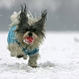 This scrappy little guy ran at full speed over a frozen lake in Beijing, China.