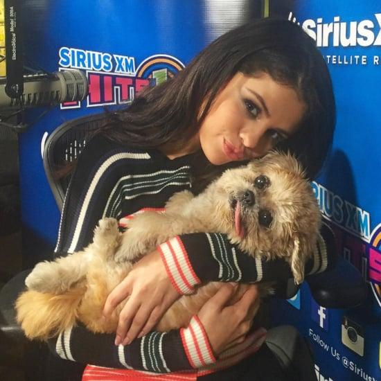 الكلبة مارني مع المشاهير على الإنستغرام