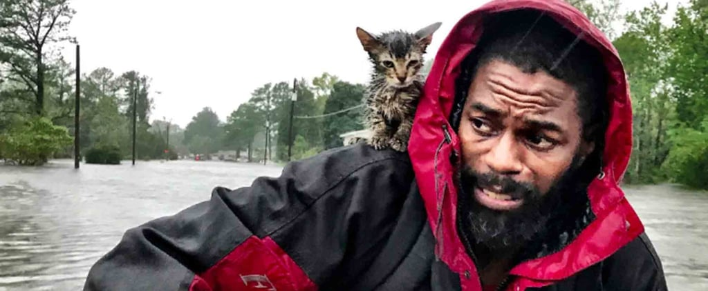 Photo of Man Rescuing a Kitten During Hurricane Florence