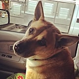 CelebStyle's Mandi Villa shared a snap of her German Shepherd and Chow mix, Luckie, going for a joy ride.