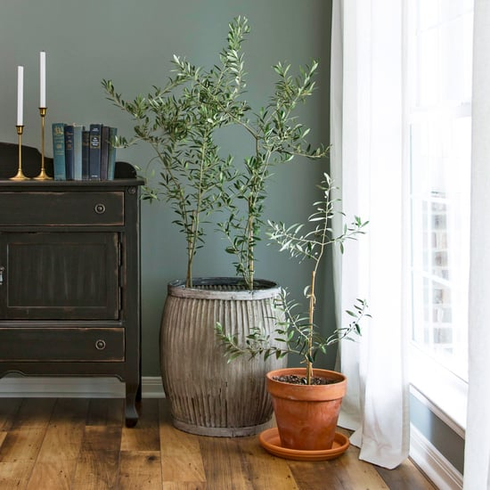 Joanna Gaines's Favorite Houseplant Is an Olive Tree