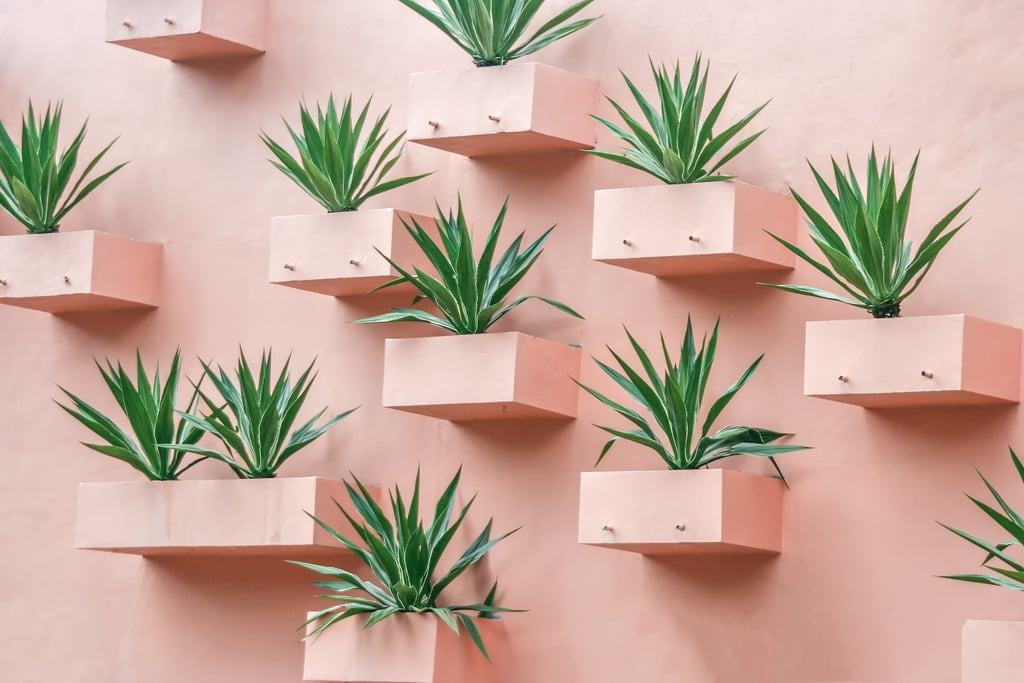 Build a Bright Pink Succulent Wall