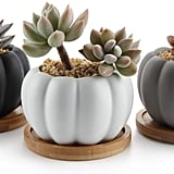 Modern Pumpkin Design Succulent Plant Pots