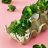 Succulent Egg Planters