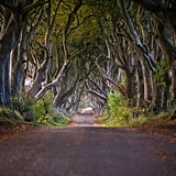If you're a Game of Thrones fan, you'll definitely also want to check out the infamous Dark Hedges in Co. Antrim. You'll recognize this avenue of beach trees as the Kingsroad in season two, episode one of the HBO series. Parking is available near the hedges and you can explore for as long as you'd like. Just be warned: there are usually a lot of people trying to get the perfect photo on any given day, so capturing one with zero people in it will definitely be a challenge!