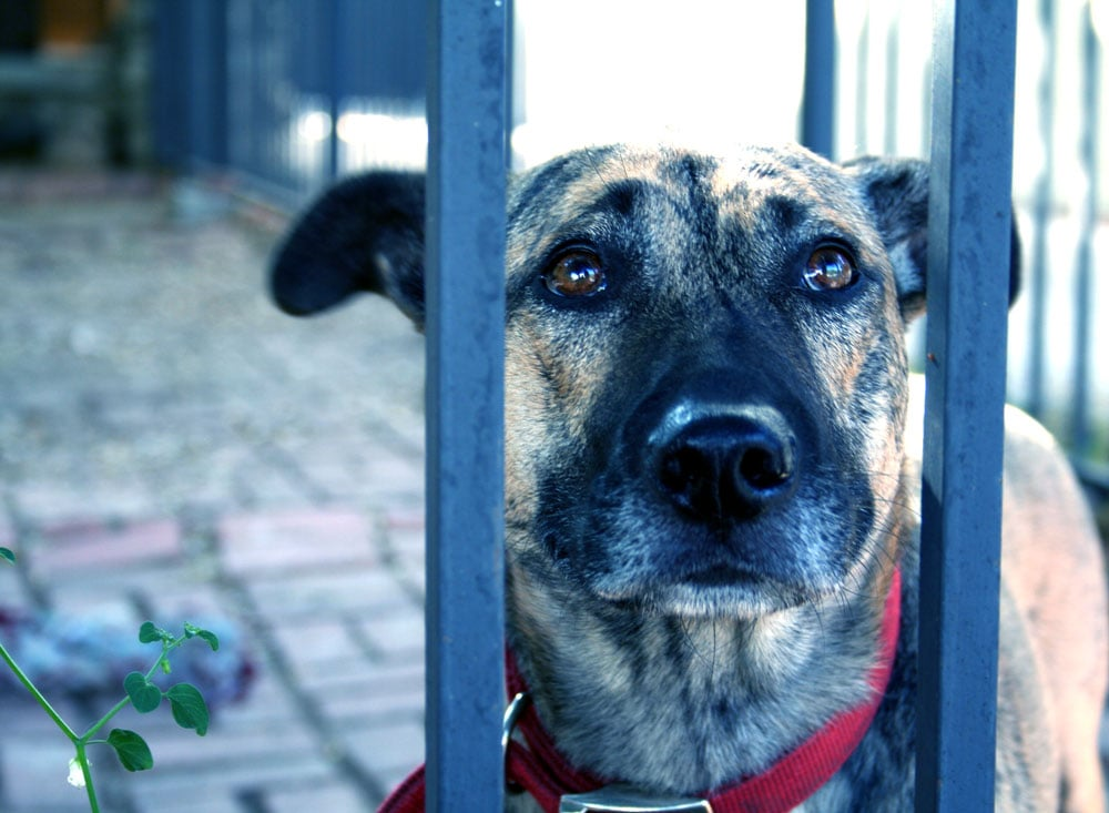 Myth: All Shelter Dogs Have a History of Abuse