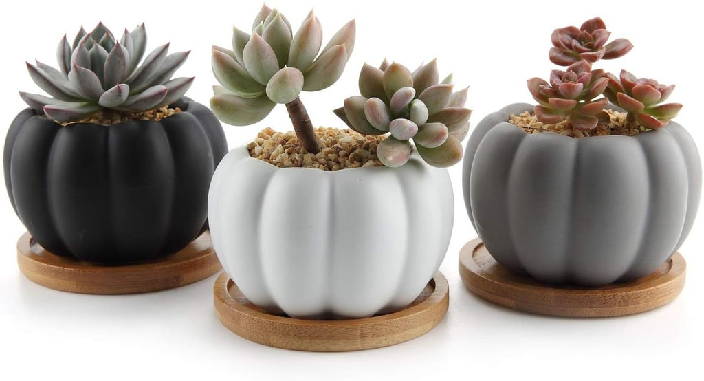Modern Pumpkin Design Succulent Plant Pots Best Fall Home Decor Accessories Popsugar Home Uk Photo 10