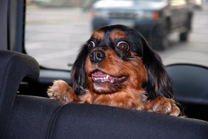 What to Pack For Road Trips With Your Pet