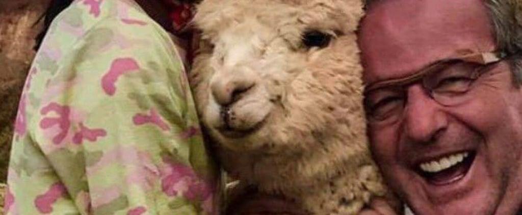 Viral Tweet About Dad's Reaction to Meeting Alpacas in Peru