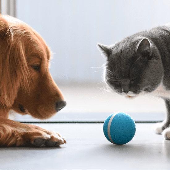 Interactive Ball For Pets