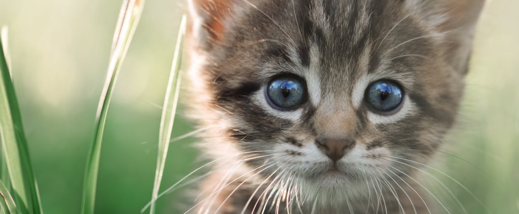 Quiz: Do You Know These Wacky Cat Facts?