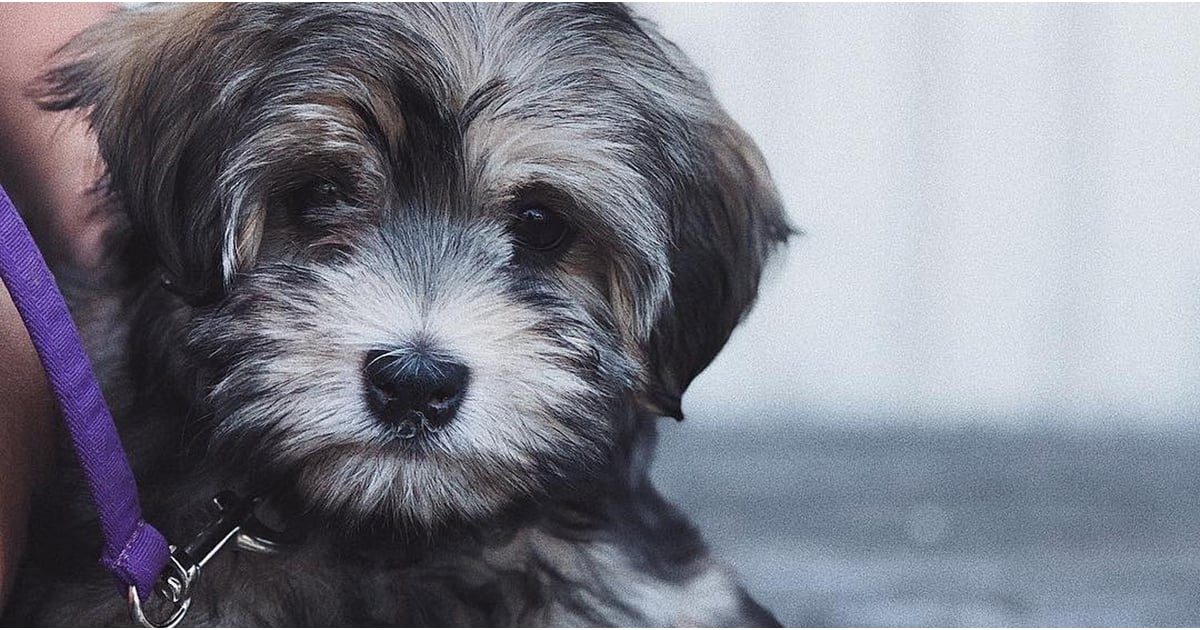 10 Most Expensive Dog Breeds | POPSUGAR Pets