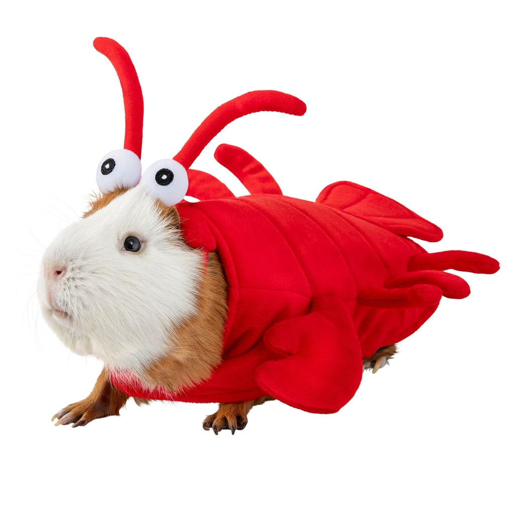 Thrills & Chills Small Pet Costume — Lobster