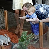 He took George to see a zoo exhibit in Sydney, Australia, in 2014.