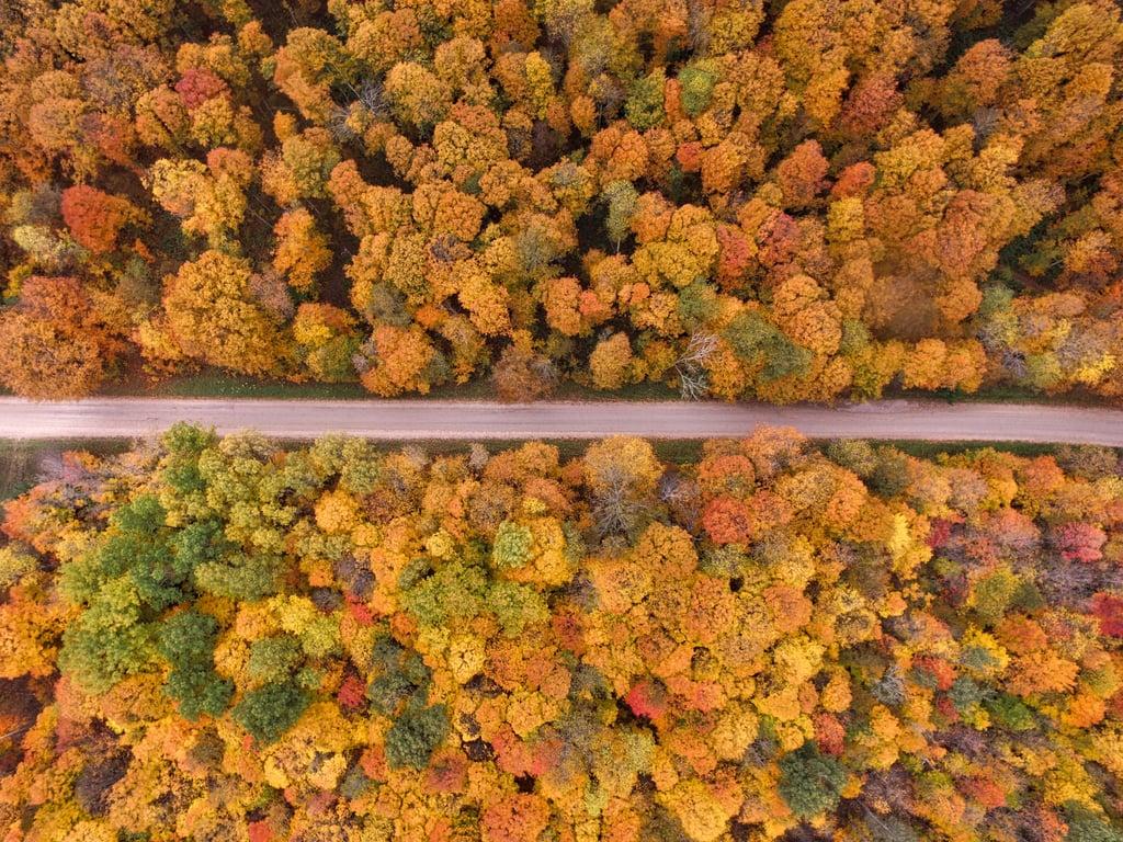 Go on a foliage road trip.