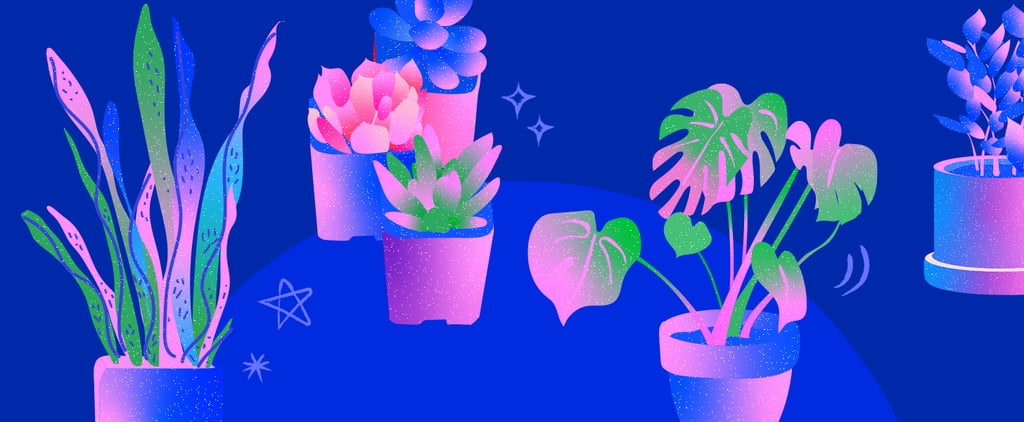 Which House Plant Is For You Based on Your Personality