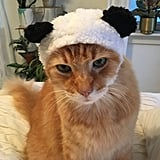 Bear Cat Cap ($8)