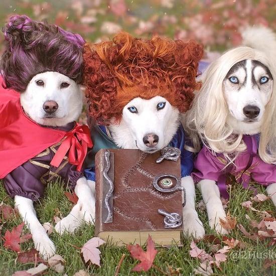 Silly Animal Memes | POPSUGAR Pets