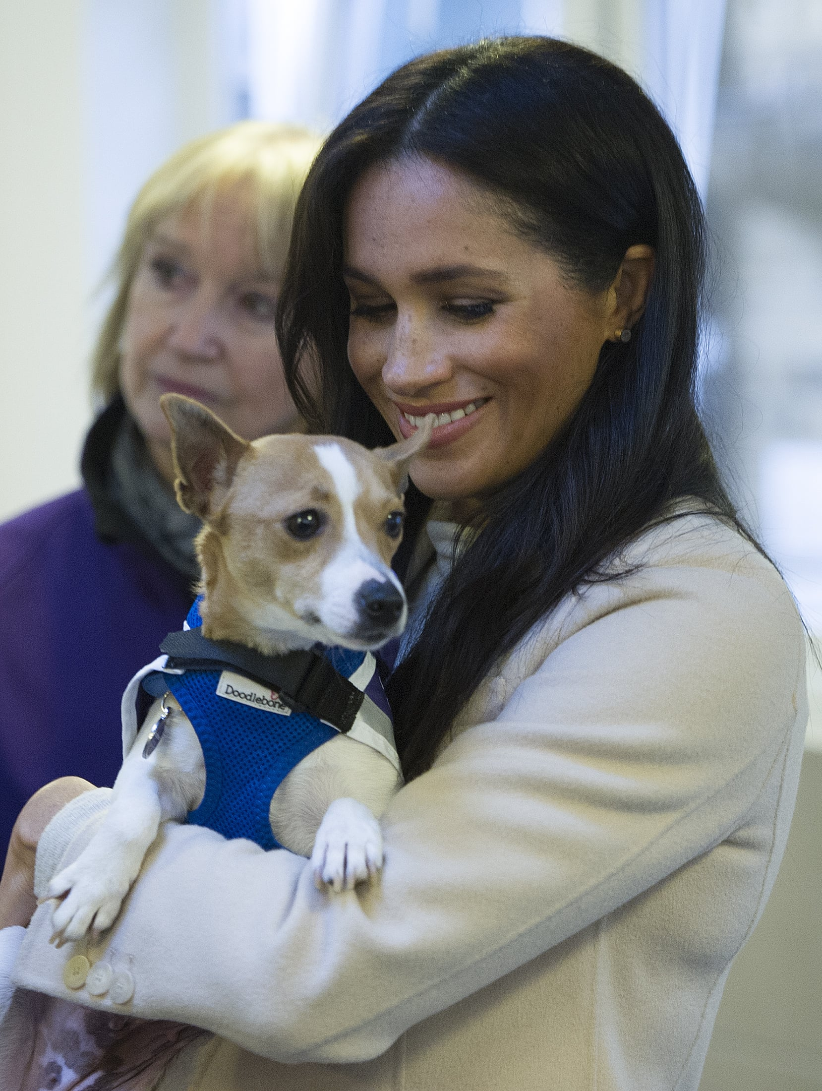 LONDON, ENGLAND - JANUARY 16:  Meghan, the Duchess of Sussex meets a Jack Russell called