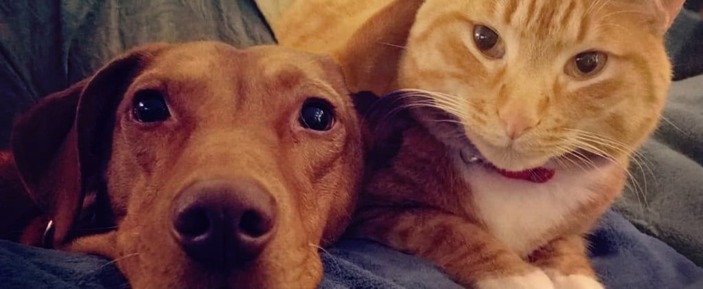 Videos of Cat and Dog Who Snuggle Together Every Day