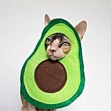 Avocato Cat Costume
