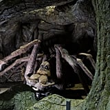 "Warner Bros. says that visitors ""will come face-to-face with Aragog, the Acromantula. Emerging from his dark lair, the enormous spider will appear before visitors along with spiderlings from his family."""
