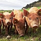 FarmFood360 Virtual Farm and Food Tours