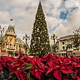 Disneyland: In Front of the Christmas Tree on Main Street, U.S.A