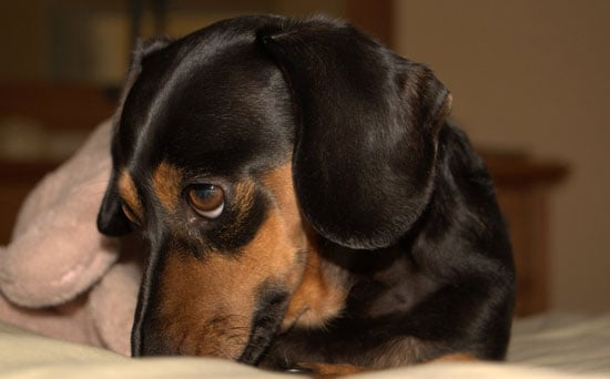 All-Natural Pet Stain Cleaning Tip