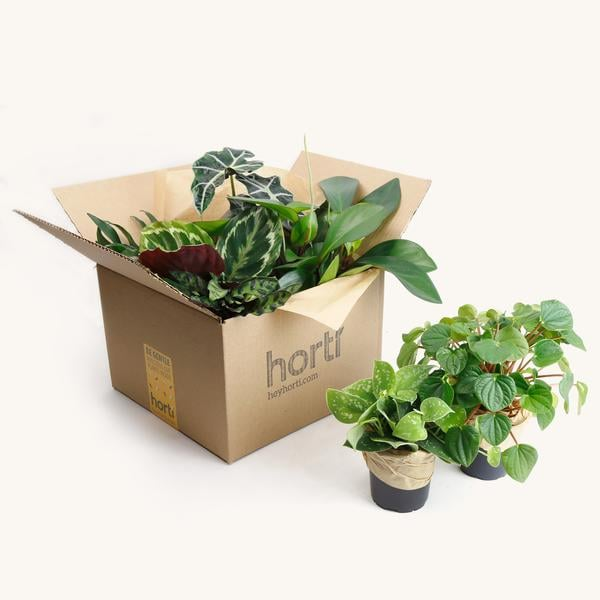Horti Order a Jungle