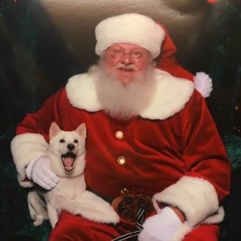 Dog Meets Santa | Twitter