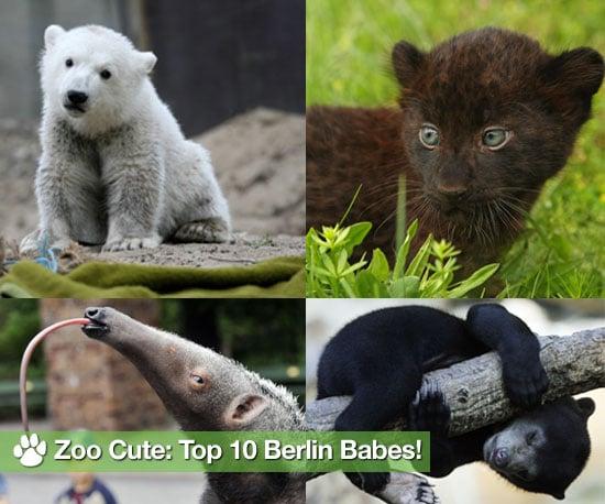 """Who Is """"Zoo Cute"""" in Berlin?"""