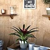 Costa Farms Flowering Bromeliad Indoor Plant