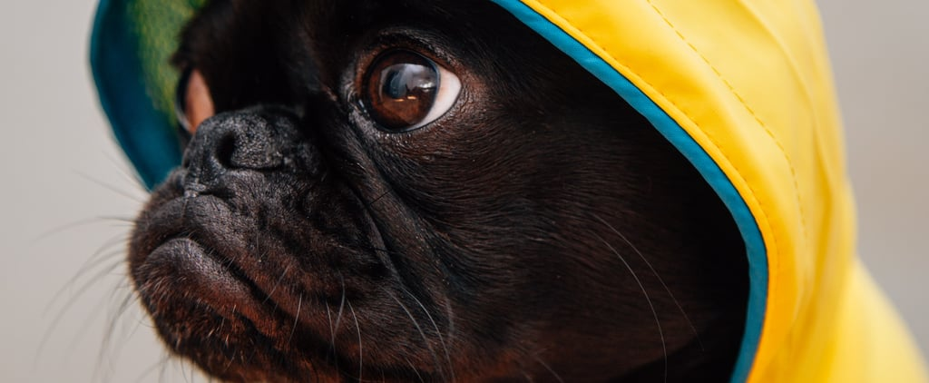 Hurricane Safety Tips For Pet Owners