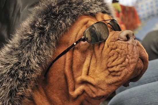 Fetch Club in NYC a Nightclub For Dogs