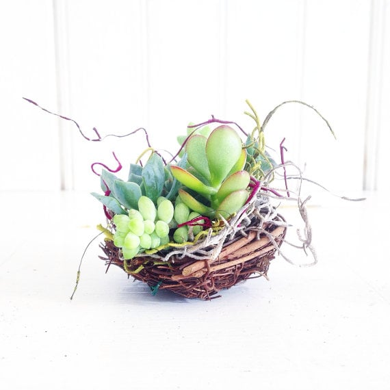 Succulent Woodsy Bird Nests