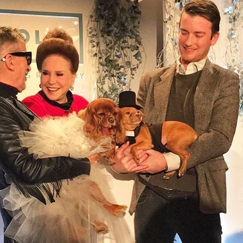 Toast and Finn's Wedding   Instagrams