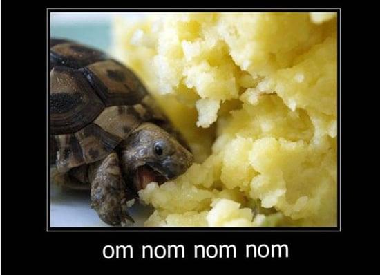 Cute Alert: Turtle Gets His Snack On