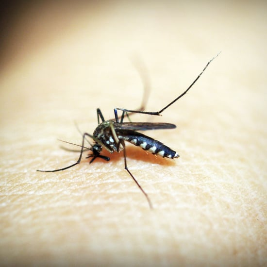 How to Get Rid of Mosquitos