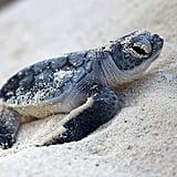 Endangered Turtles Release Program